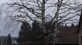 Jardimpact - Abattage & élagage